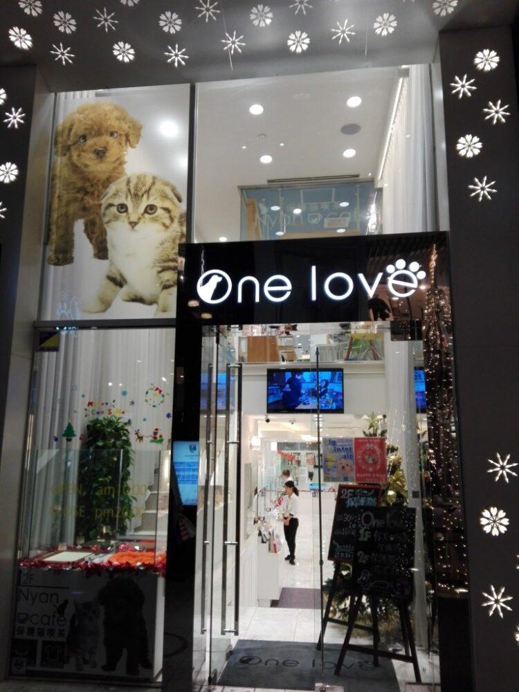 猫カフェ「onelove」